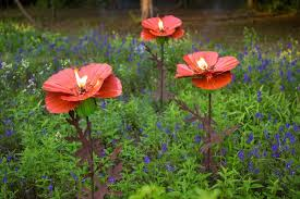 growing poppies info